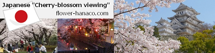 cherry-blossom-viewingl